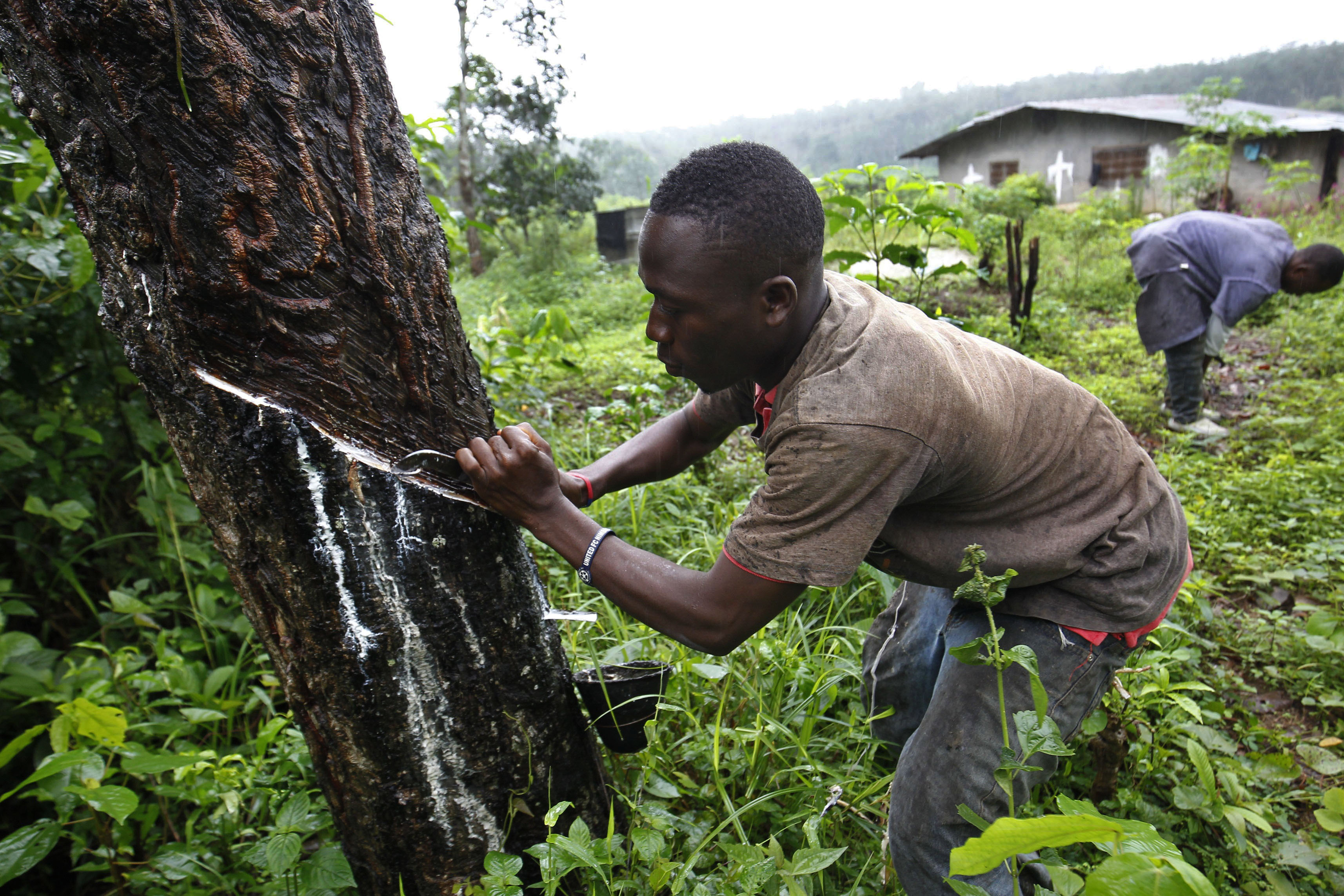 Rubber plantation worker in Liberia - New Europe